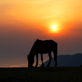 A wild horse in sunset by MIYAMOTO Y - Animals Horses ( wild, japan, sky, silhouette, sunset, horse, sea, miyazaki, sun, animal )