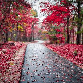 by Lou Plummer - City,  Street & Park  City Parks ( walking, autumn, color, fog, fall, leaves, rain, hiking )