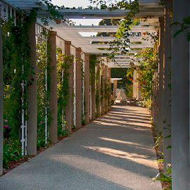 Covered Trellis - Huntington Gardens by Jackie Stoner - Buildings & Architecture Other Exteriors ( trellis, huntington gardens, gardens, walkway, greens and whites, sun-lit )