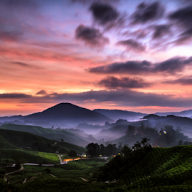 Sunrise at the tea farm by Gary Yip - Landscapes Prairies, Meadows & Fields ( farm, hill, sunrise, morning, sun )