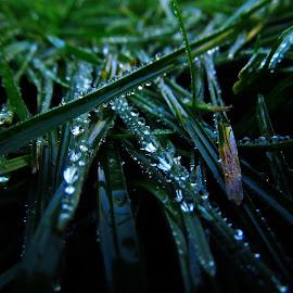 Rain drops by Dragan Dvorski - Novices Only Macro ( raindrops, rain )