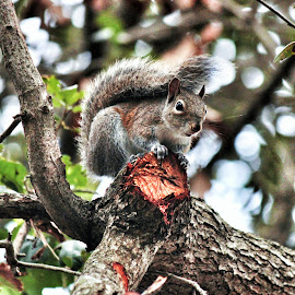 My Squirrel Buddy by Florent Alezi - Animals Other Mammals