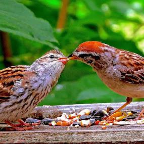 FEEDING THE BABY by Doug Hilson - Animals Birds ( colorful, cute, close up, bird feeding baby bird,  )