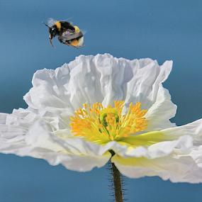 First visitor by Michael Schwartz - Flowers Single Flower (  )
