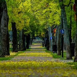 Walking by Lasbi Naboj - City,  Street & Park  City Parks ( walking, naantali, park, autumn, finland, city,  )