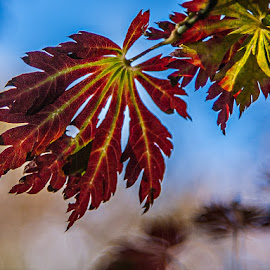 The unmistakable change of fall by Brent Morris - Nature Up Close Leaves & Grasses