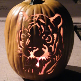 Tiger Pumpkin by Donna Probasco - Novices Only Objects & Still Life