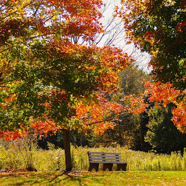 The Getaway by Eve Spring - City,  Street & Park  City Parks ( orange, bench, tree, park, autumn, leaves, foilage, fall, color, colorful, nature )