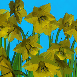 Daffodills Watercolor by Jerry Androy - Painting All Painting