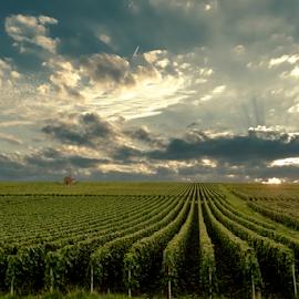 by Mihai  Costea - Landscapes Prairies, Meadows & Fields