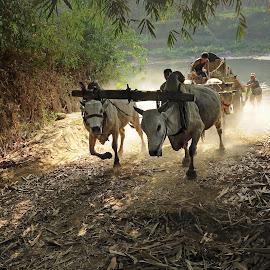 by Luqman Supanji - Transportation Other