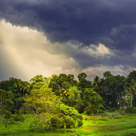 The escape by Nikhil Zachariah - Landscapes Cloud Formations ( #sunlight #ray #forest #light #green )