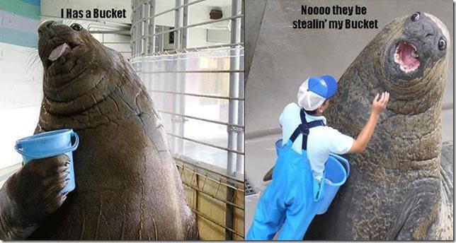 walrus_bucket