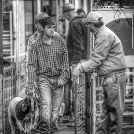 Stock Show 2 by Rob Baker - People Family (  )