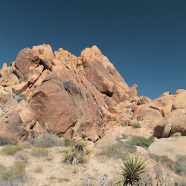 Joshua Tree by Wendy Smith  - Landscapes Deserts ( joshuatree, desert, rocks )