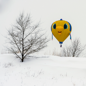 Winter Color by Andy Chow - News & Events Entertainment ( hot air balloon, hot air affair, balloon )