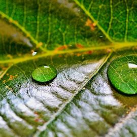 Drop by Sufyan Al-Shatshat - Nature Up Close Water ( water, macro, drop, drops, nikon d, nikon )