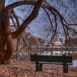 Early Morning in the Park by Steve Morrison - City,  Street & Park  City Parks