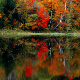 Reflections of Autumn by Janet Lyle - Landscapes Waterscapes ( water, autumn, foliage, fall )