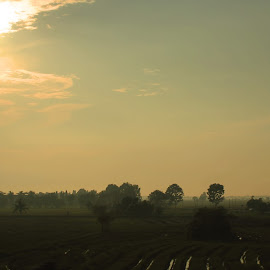 a morning view by Fujiwara Ashita - Landscapes Prairies, Meadows & Fields ( dawn, hours, fujiwara, landscape, golden )