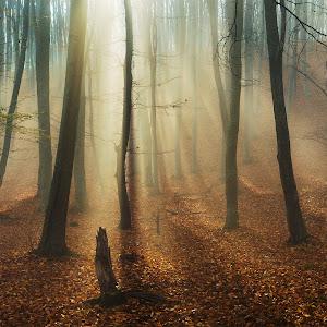 ForestHD.jpg
