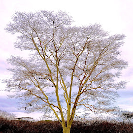 Barren Tree in Swaziland by Tyrell Heaton - Nature Up Close Trees & Bushes ( swaziland, barren, tree,  )