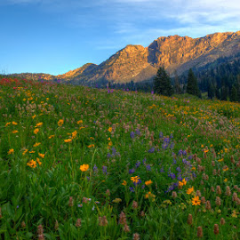 Devil's Bloom by Ryan Moyer - Landscapes Prairies, Meadows & Fields ( wildflowers, mountains, alta, utah, meadows, albion basin, landscape )