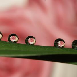 by Aroon  Kalandy - Nature Up Close Natural Waterdrops