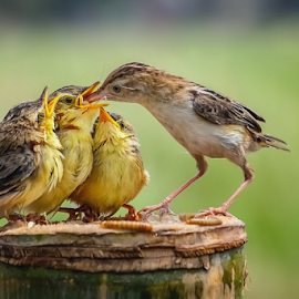 Feed the Kids by MazLoy Husada - Animals Birds