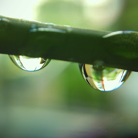 *nothing wrong to try.. by Rayna Brilliantsyah - Nature Up Close Natural Waterdrops