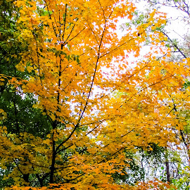 Forest by Vaibhav Jain - Landscapes Forests ( plant, nature, trees, forest, yellow, leaves, garden, soil )