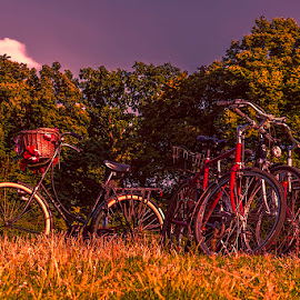 Moment of relaxation by Jim Cunningham - Transportation Bicycles ( warm, park, green, day, bicycle )
