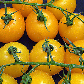 Yellow tomatos. by Andrew Piekut - Food & Drink Fruits & Vegetables