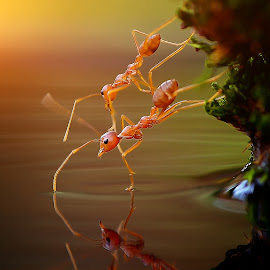 awas jatuh by Rhonny Dayusasono - Animals Insects & Spiders