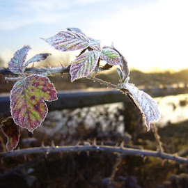 Morning frost by John Durham - Novices Only Wildlife
