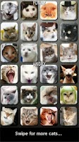 Screenshot of Cat and Kitten Soundboard