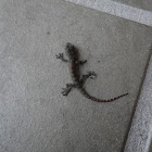 Unknown Lizard