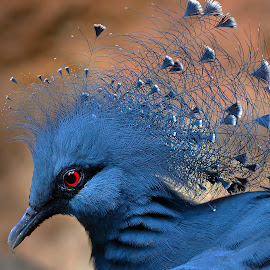 by Jeff Fox - Animals Birds
