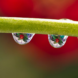 Three Drops by Sue Matsunaga - Novices Only Macro
