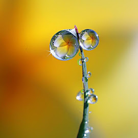 :: Two :: by Dedy Haryanto - Nature Up Close Natural Waterdrops (  )
