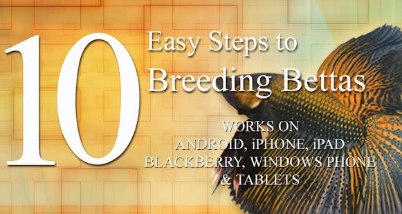 10 Easy Steps to Breed Bettas - screenshot