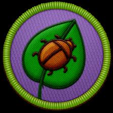 Bug Lover