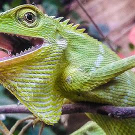 by Birhat Ahmad - Animals Reptiles