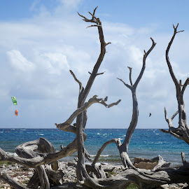 ultimate sculpture by nature by Nicolette Enhorning-Picton - Artistic Objects Other Objects ( dutch antilles, waves, bonaire, caribbean )