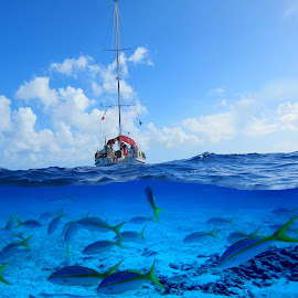 Down under by Jay Anderson - Digital Art Places ( coral, vacation, reef, fish, ship, scuba, dive, sea, sail, ocean, boat,  )