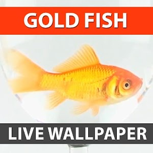 Download gold fish live wallpaper apk on pc download for Fish live game