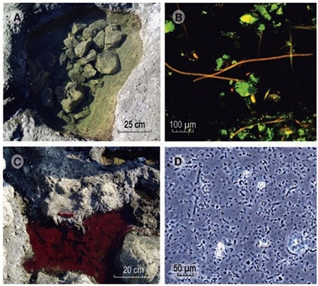 Bacterias en arsénico