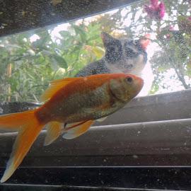 Got my eye on you by Jeffrey Appleyard - Animals Fish