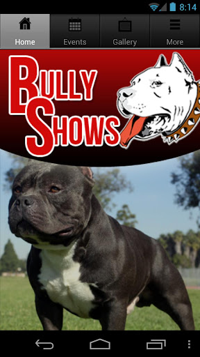 Bully Shows