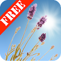 Lavender Field Free icon